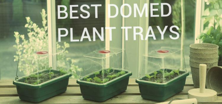 grow trays